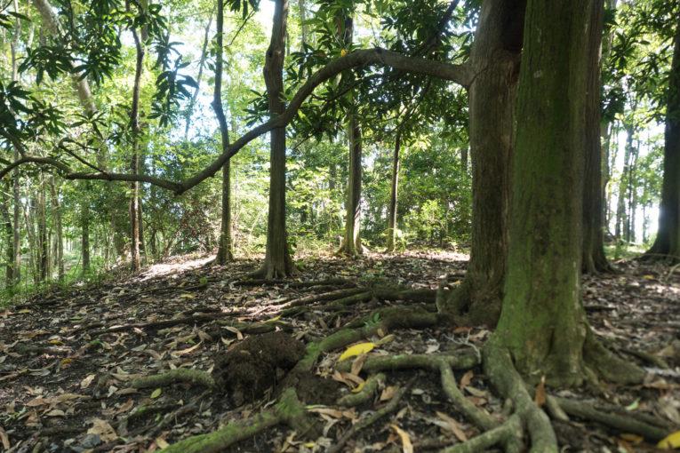 balade archeologique GIHA tourisme responsable necocli en colombie
