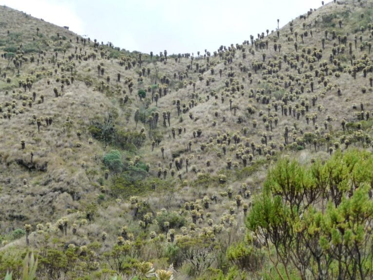frailejones Trek au parc los nevados randonnée colombie
