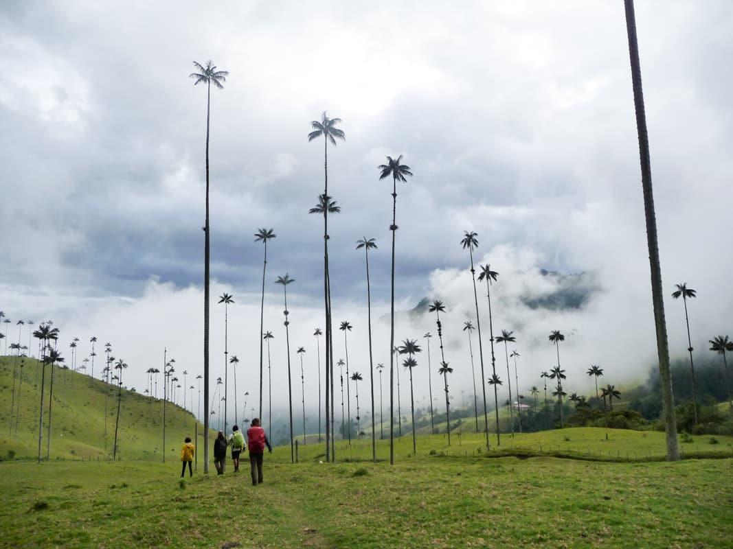 vallée de cocora Trek au parc los nevados randonnée colombie