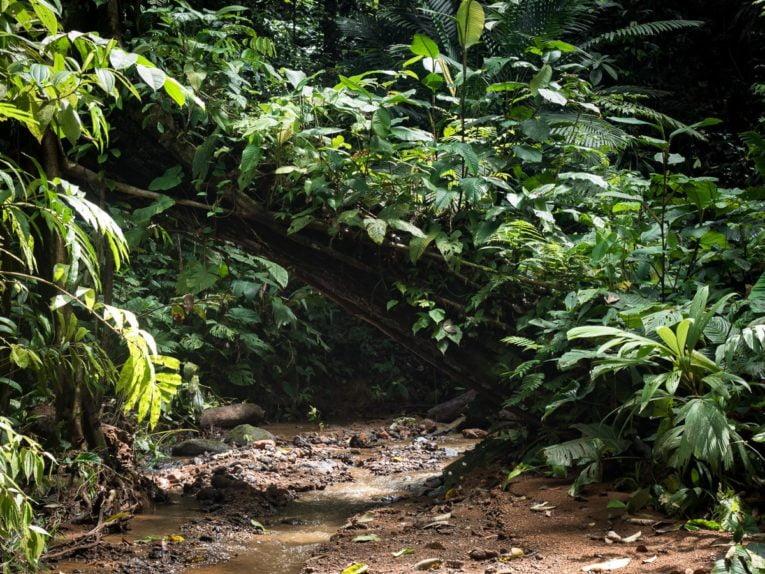 forêt du parc utria près de Nuqui et Bahia Solano en Colombie