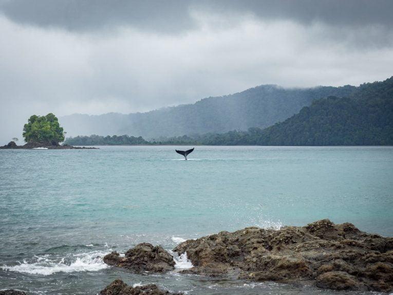 playa blanca parc utria pacifique colombie