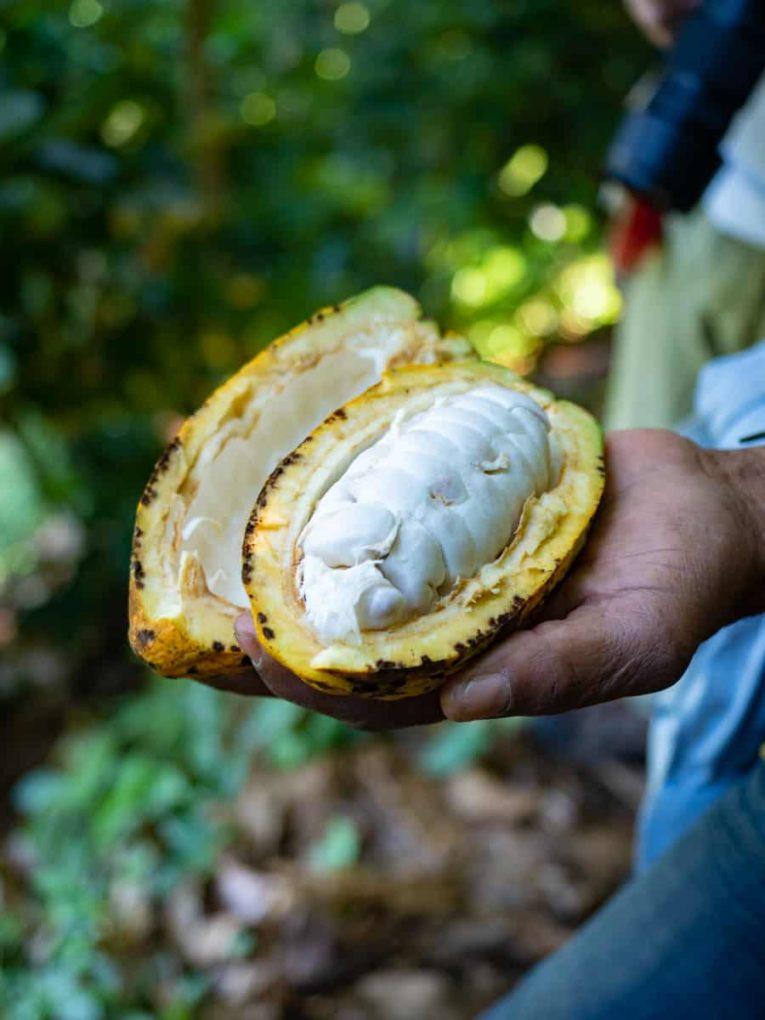 cacao tour à minca sierra nevada colombie
