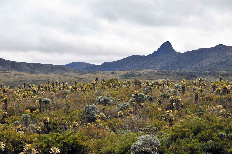Parc naturel de Puracé en Colombie