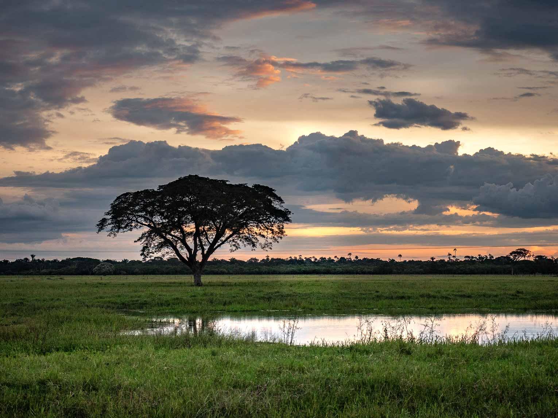 région orinoquia, los llanos en Colombie