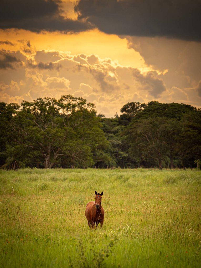 Cheval au Coucher de soleil dans le Casanare