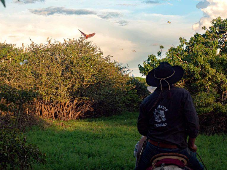 Hato Las Gaviotas, Trinidad près de Yopal dans le Casanare, Llanos de Colombie