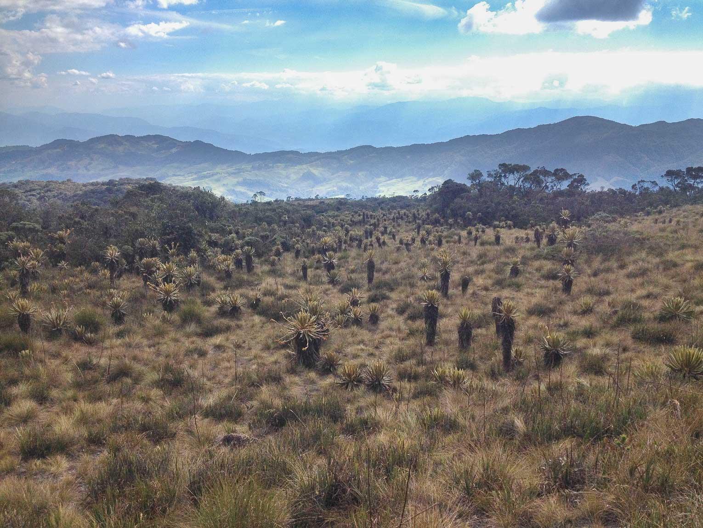 Trek et randonnées autour de Medellin en Colombie