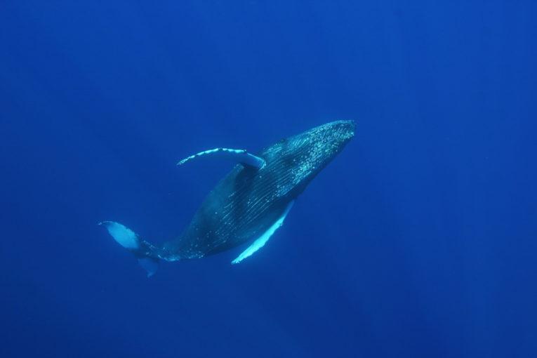 Plongée sous-marine sur la Côte Pacifique en Colombie