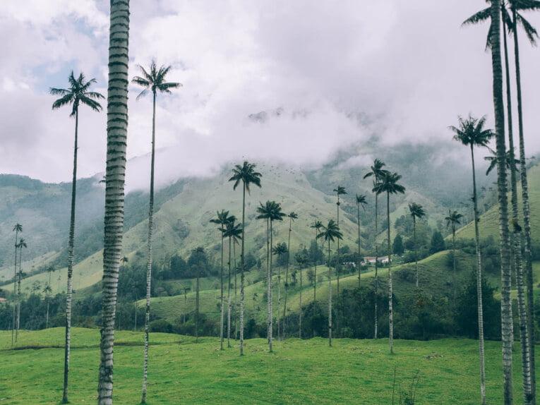 Vallée de Cocora en Colombie