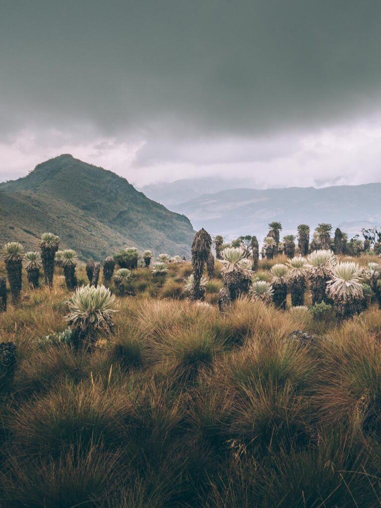 Paramo de Oceta boyaca Colombie